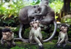 очаровательные обезьяны