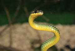 красивая зеленая дикая змея скачать