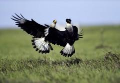 Птицы, борьба, сокол, картинки