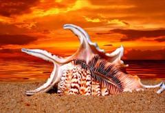 Биг Шелл на пляже ракушка