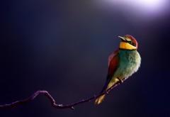 Птицы фоновые картинки
