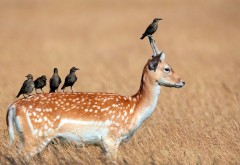 птицы на олене