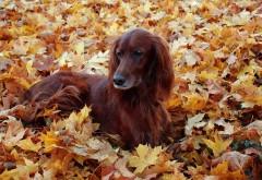 Собака лежит в листве