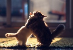 боевые котята, бой котов, котики