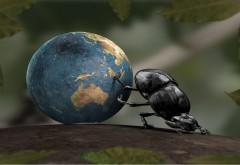 Красивые обои насекомого тащущего весь мир в своих пал…