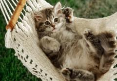 Котенок в гамаке картинки для стола
