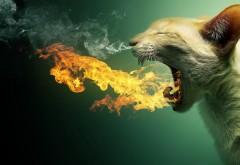 кошка пламя