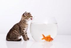 кот облизывая аквариум
