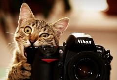кошка, камера, смешно