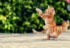 кошка, кошки, котенок