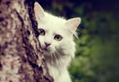 Белая кошка за деревом обои на стол