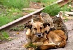 кошки, собаки, обниматься, милашки