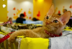Кошка в кроватке для рабочего стола обои