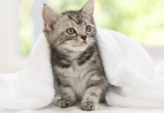 Кошки животные котята для андроид