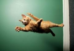 Летающая кошка карате