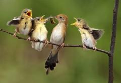 птицы, питающиеся