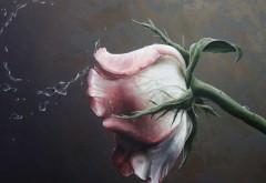 роза живопись макро картинки