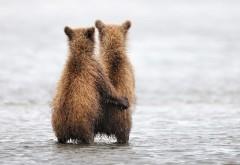 медвежата обнимаются обои на раб стол