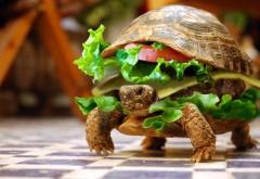 Черепаха-гамбургер