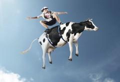 Облачный серфинг на корове