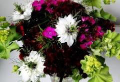 гвоздики, цвет, композиция, вкус