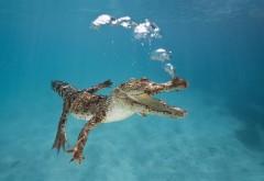 крокодил c пузырями прикольные заставки скачать