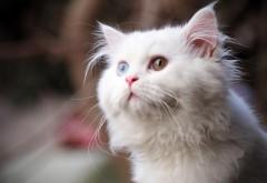 белый кот картинки скачать