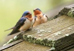милые птицы рабочего стола лето HD