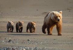 Фоны милые медвежата
