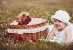 Смазливая девочка и корзина со щенком