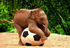 Симпатичный слон малыша младенца играет с футбольным мячом