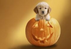 милый щенок на тыкве заставки