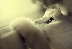 Симпатичная белая кошка голубые глаза заставки на раб�…