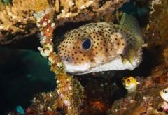 подводные рыбки, океан, морские обитатели, картинки