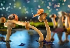 Красивая сказка улитки на грибах в пруду