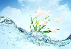 Красивые тюльпаны белого цвета в воде