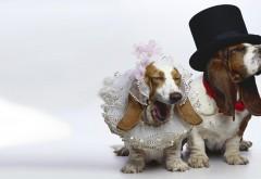 собаки только что вышли замуж женились