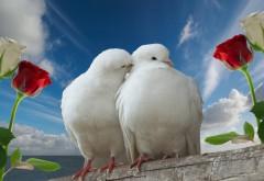 голуби, пара, выросла небо, любовь