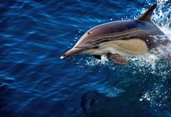 дельфин синее море обои для рабочего стола