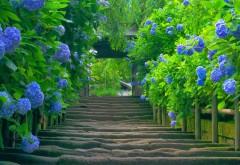 Красивая цветущая зелень на лестнице на улице