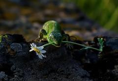 ящерица с цветком