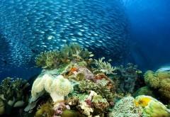 коралл, природа, океан, риф, школа, море, тропический, по…