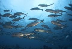 Подводные океан обои HD бесплатно