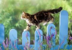 Заборы, Кошки, Животные Глубина поле, Частокол, Фон
