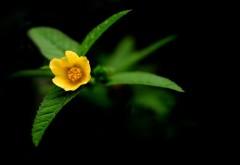 цветы макро желтый фон картинки