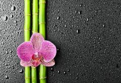 Цветок орхидея на бамбуке обои на рабочий стол