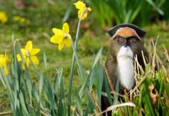 смешно обезьяна картинки для рабочего стола