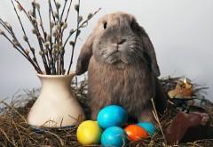 смешно Пасхальный кролик картинки для рабочего стола