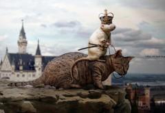 мышь король на коте смешные картинки для рабочего стол…