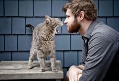 Забавный кот против парня картинки для рабочего стола